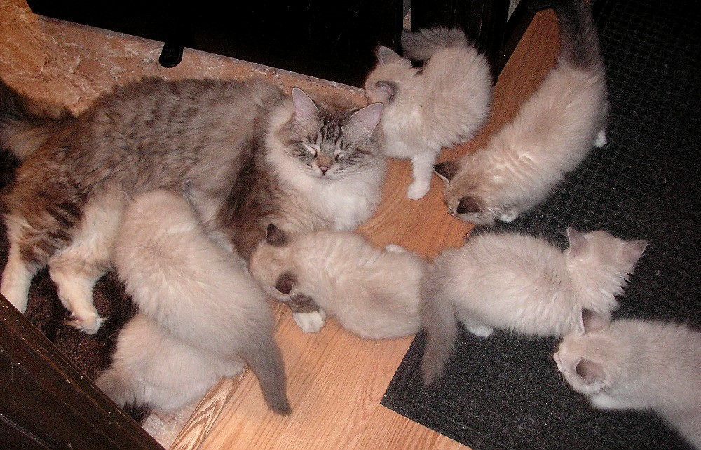 Happy playing with the kittens