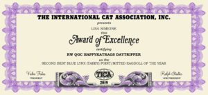 2019 TICA 2nd Best Blue Lynx